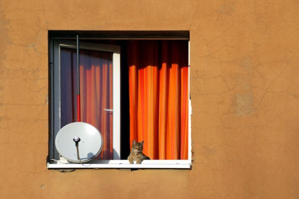 Wohnhaus teilsaniert mit Parabolantenne und Katze