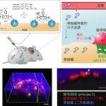 破骨細胞が骨を溶かす様子を可視化することに成功 ([MONOist])