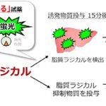 脂肪の「さび」が、がん化を促進させる ([MONOist])