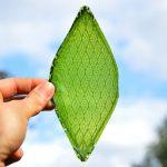 光合成する「人工の葉」、絹タンパク質に葉緑体を取り込む (三島一孝,[スマートジャパン])