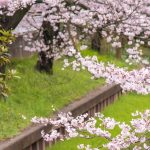 【新入社員へメッセージ】日本マイクロソフト平野社長「前向きなエネルギーに期待」